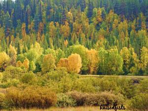 Autumn colors by RaisedFists