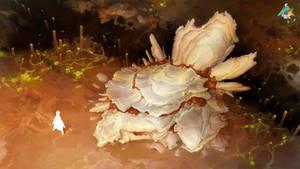 Shells 01