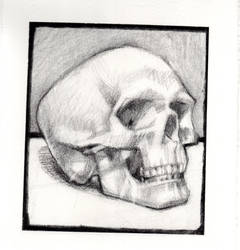 Skull Study by AlexanderDupe