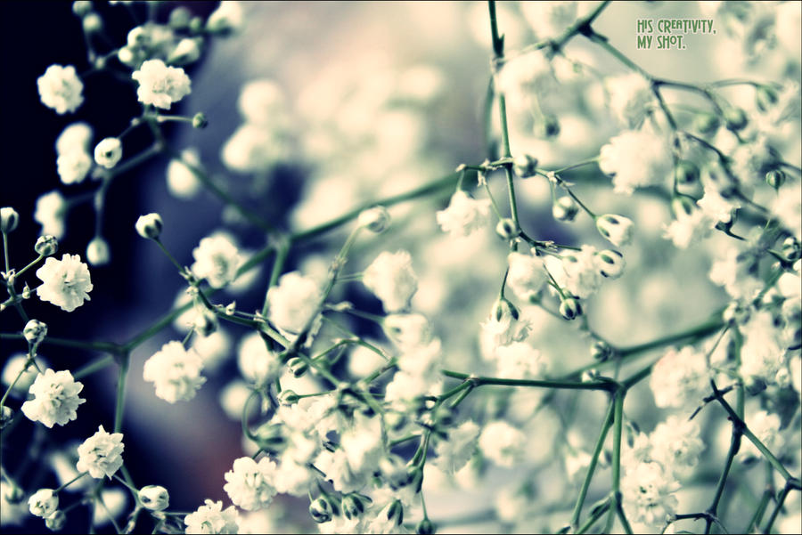 Pearls By Live Photography