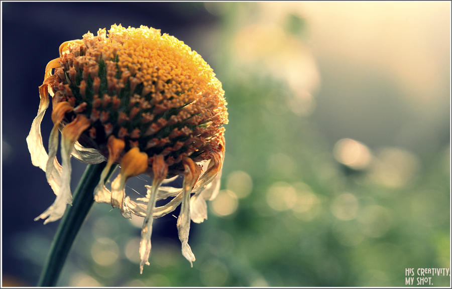 Bloom Time By Live Photography