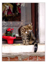 Venice - Cat at Ca' Macana's