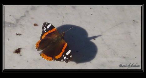 Venice - Master of Shadows