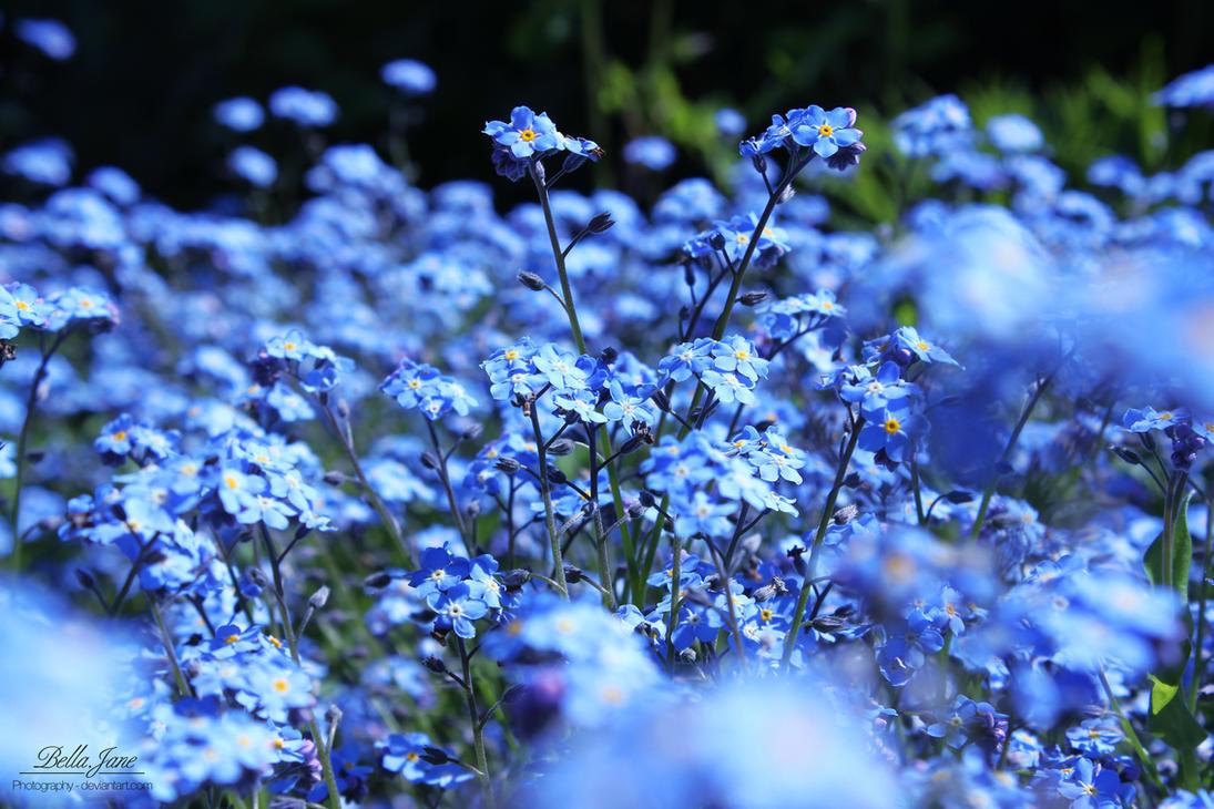 Blue paradise by xXBellcatXx