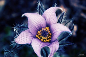 Magic flower by IsabellaJainePhoto