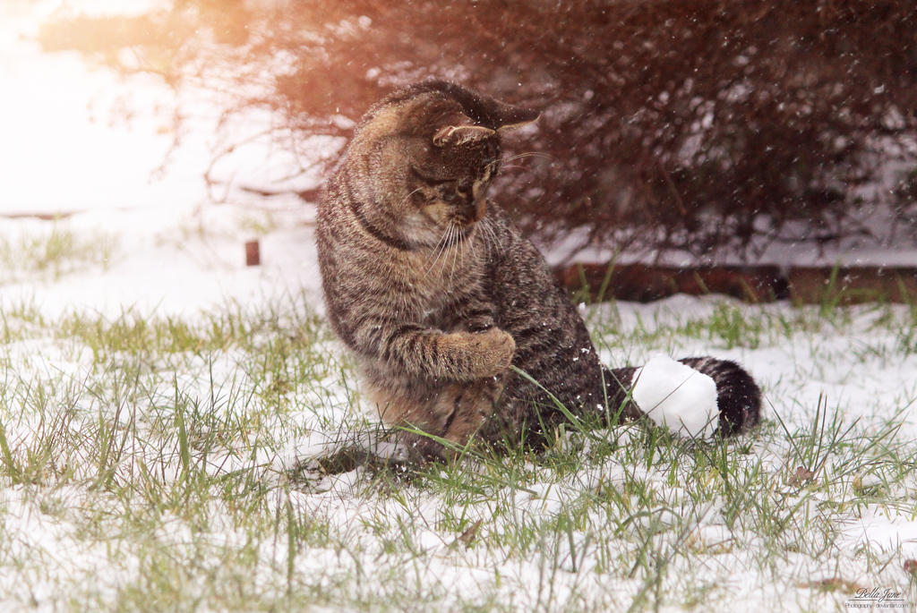 Throw snowball by IsabellaJainePhoto