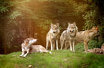Vigilant wolfpack