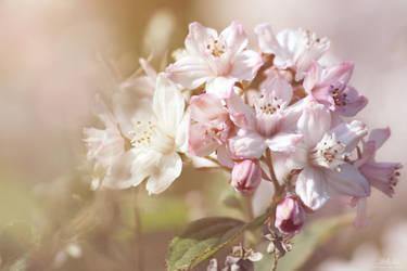 Gentle flowerage