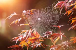 Autumnal spider dance by IsabellaJainePhoto