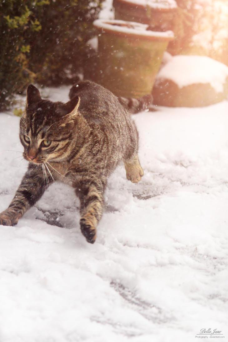 Snow is everywhere by xXBellcatXx