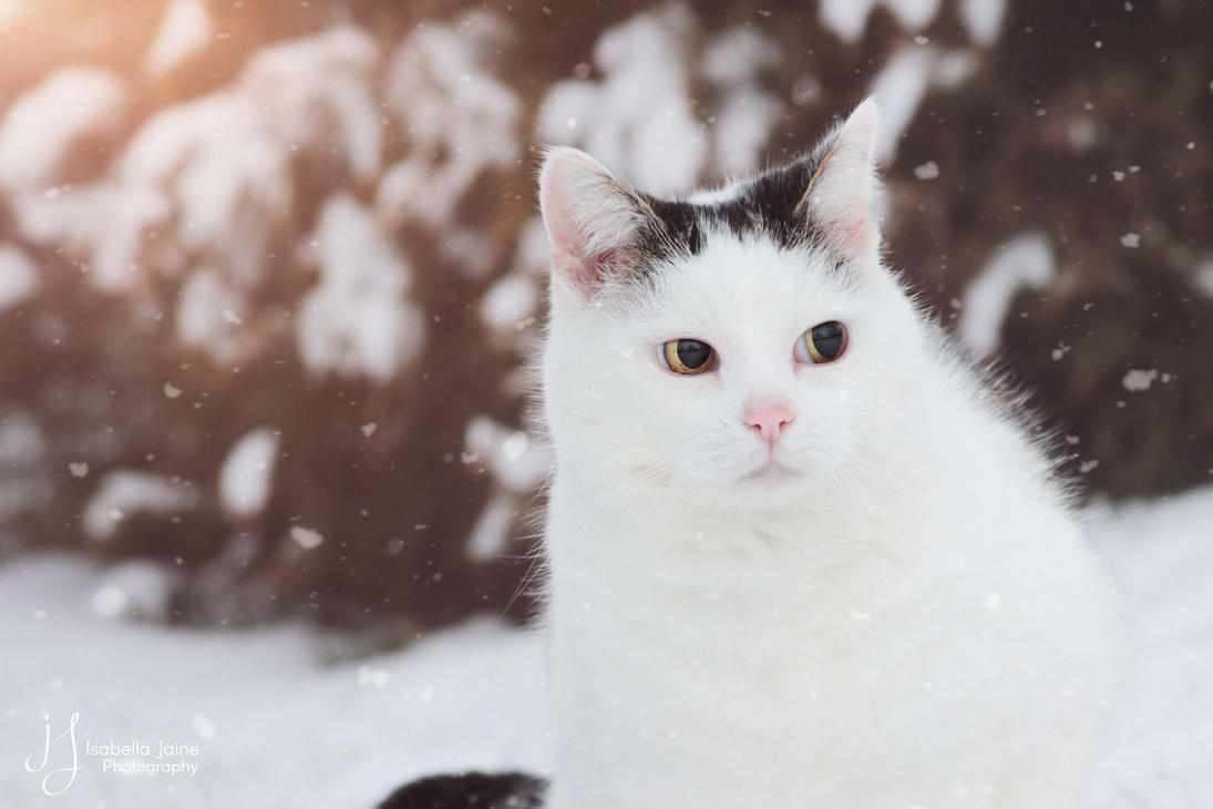 Cold, snowing and fluffy by IsabellaJainePhoto