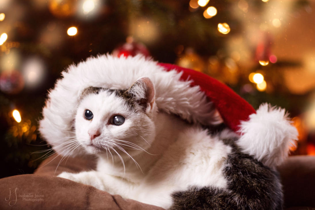 Waiting for Christmas by IsabellaJainePhoto