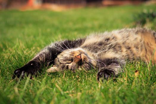 Ultimate sunbather