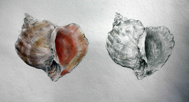 Seashell by Teries-art