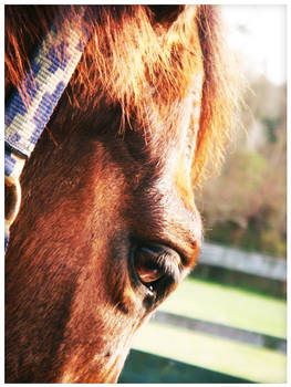 Thinking Horsie Thoughts