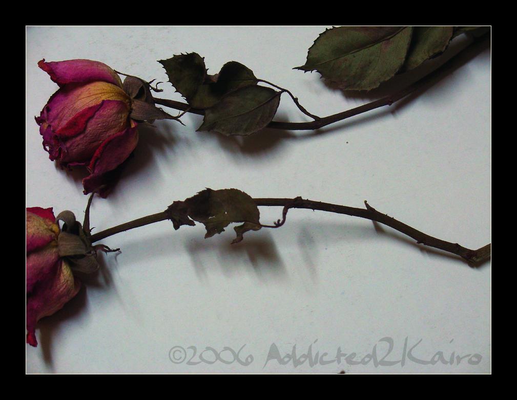Dead Flowers 03 By Addicted2Kairo