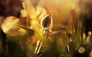 Autumn morning by vanillapearl