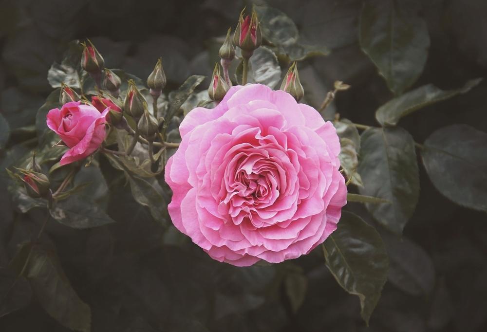 Secret garden by vanillapearl