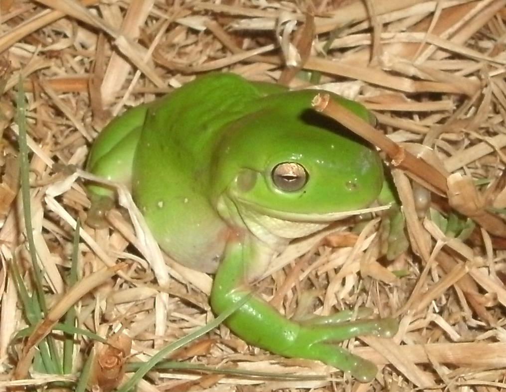 Froggus :P