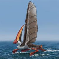 Greater Crested Sailbird