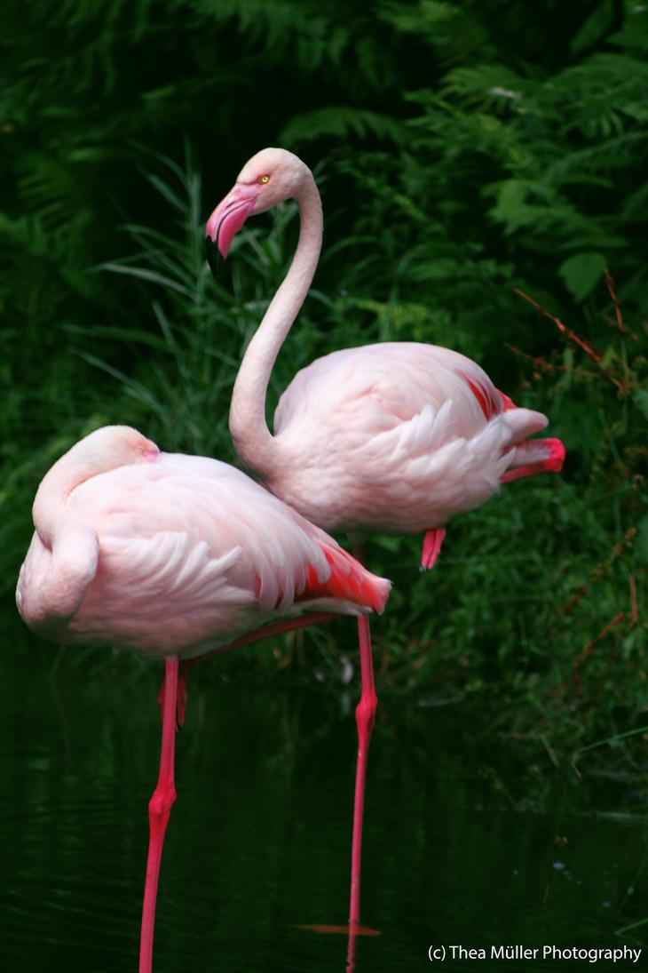 Aalborg Zoo Pink Birds by vampirenoorway