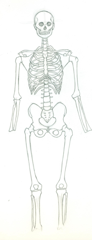 Skeletal System Practice by Eyad-mangafreak on DeviantArt