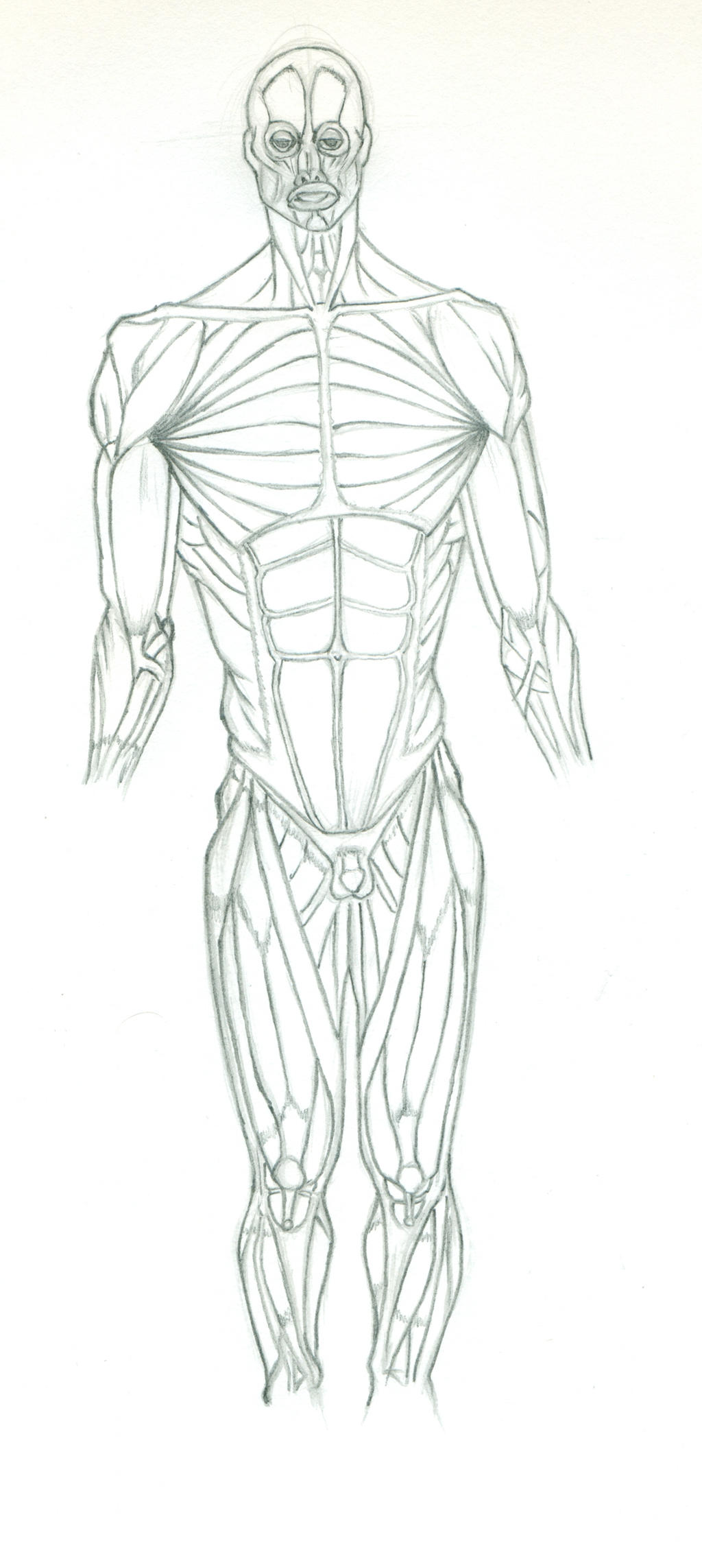 muscular system practice by eyad-mangafreak on deviantart, Muscles