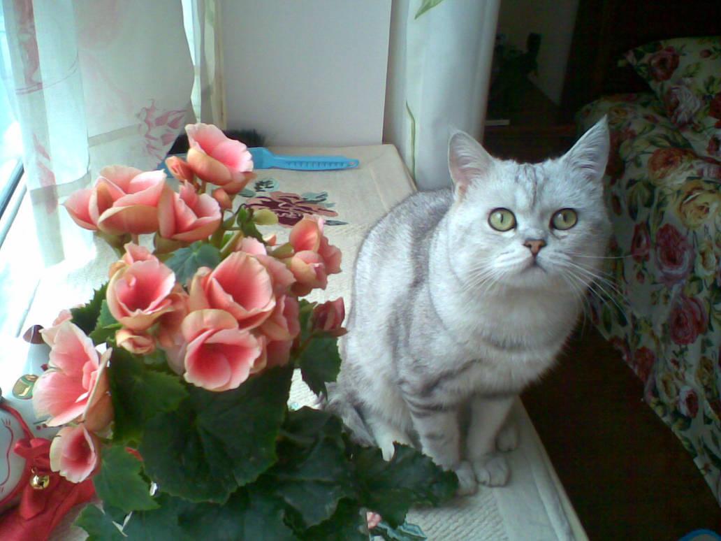 Seasons Cat