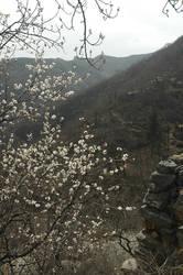 Peach blossom valley