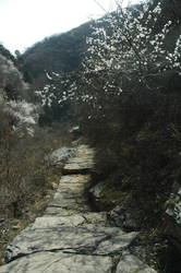 Peach blossom valley 3