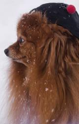 Puppy by Lady-I-Hellsing