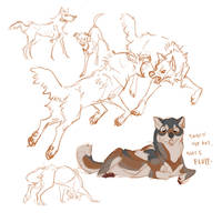 Canids by aignavus