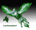Lachanopteri