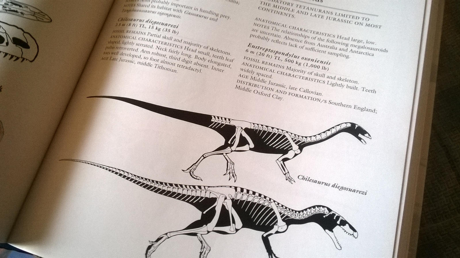 Wow Chilesaurus By Crizz24 On Deviantart border=