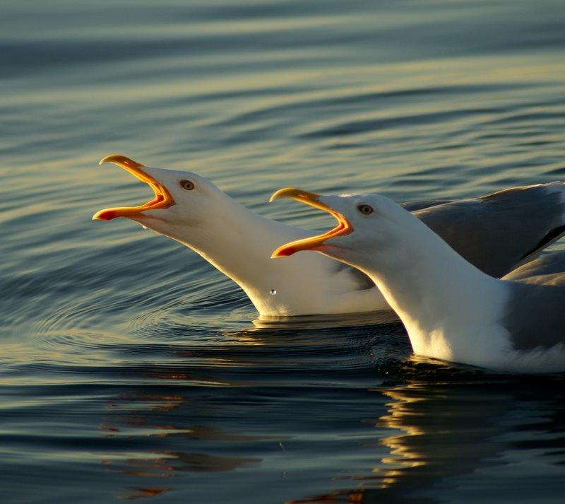 Seagull 2 by Uerskolt