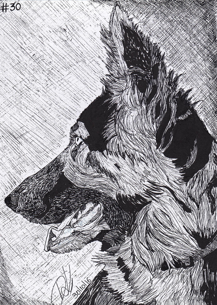 #30 Kayla the German Shepherd by demik13
