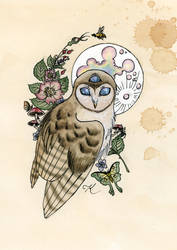 Owl with the Third Eye