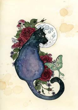 Cosmic Cat Redux