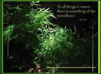 Marvelous Nature by Izzie-Kikue