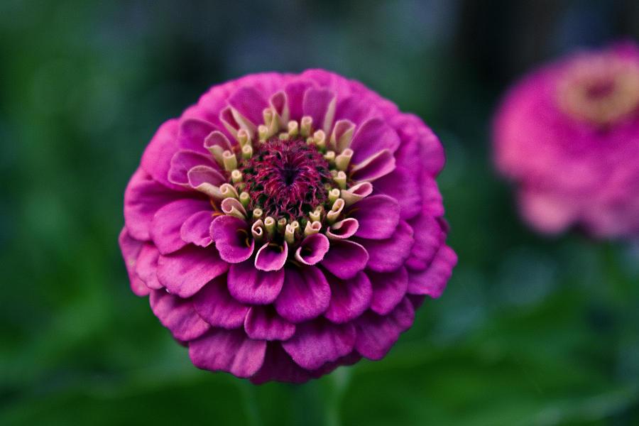 pretty flower ii by brigolden on deviantart, Beautiful flower