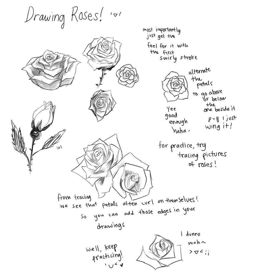 how to draw and shade a rose