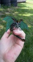 Tiny frog dragon by Kitrei-Sirto