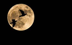 Full Moon by StefanEffenhauser