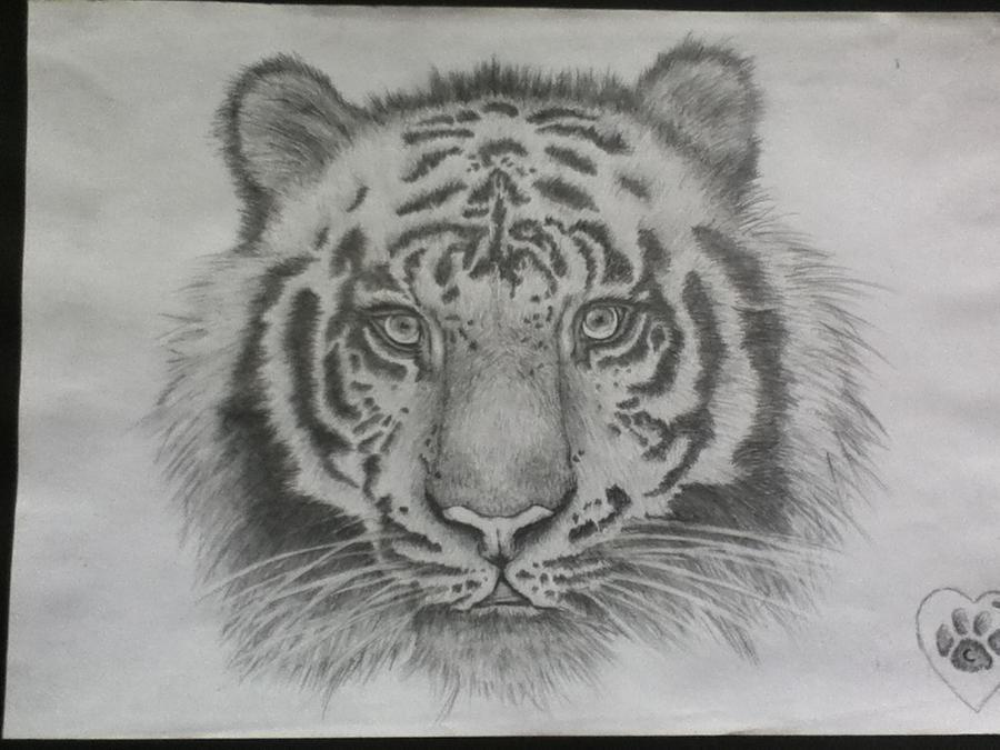 Tiger (pencil drawing) by courtney88crisp on DeviantArt