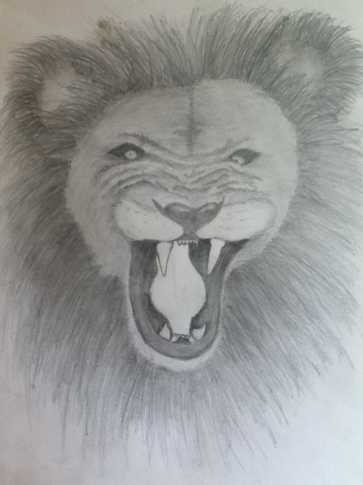 Lion pencil drawing by courtney88crisp