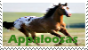 Appaloosa Stamp by FantasyFeathers