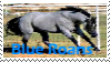 Blue Roan Stamp by FantasyFeathers