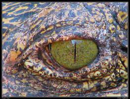 Dragon's Eye II