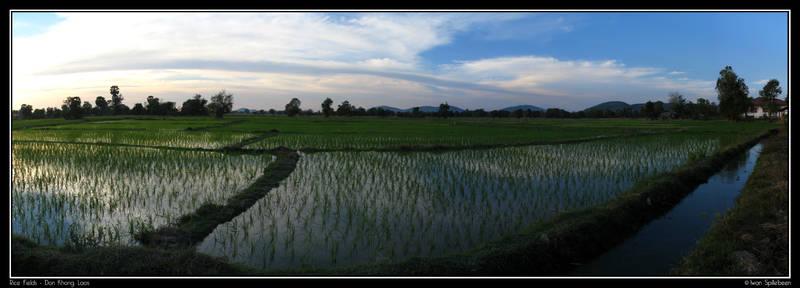 Rice Fields - Don Khong - Laos