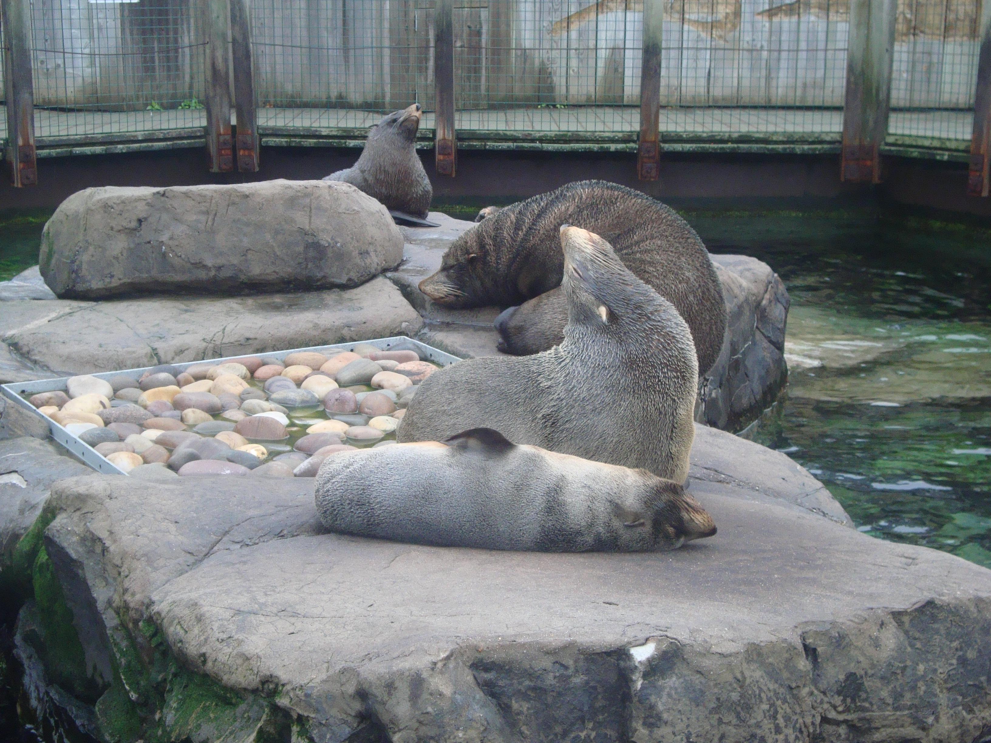 Seals wallpaper > Seals Papel de parede > Seals Fondos
